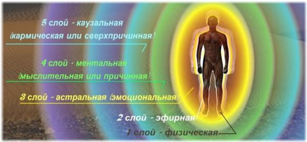 Описание слоев человека