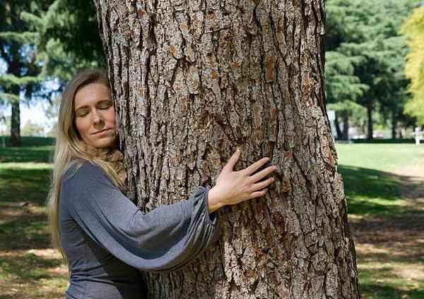 человек и дерево