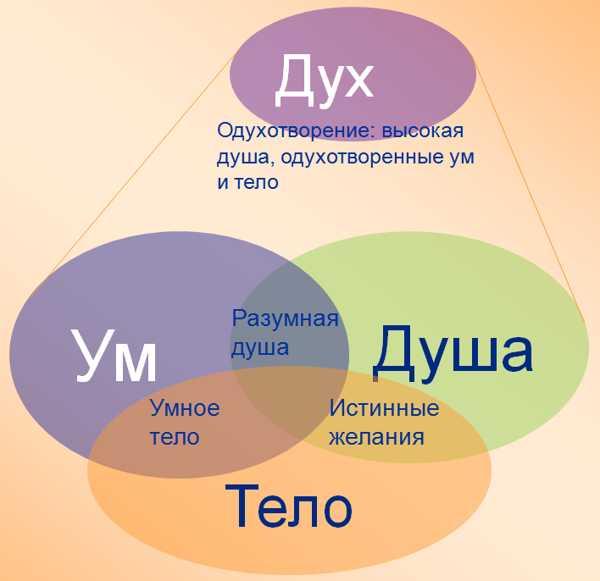 структура души и духа