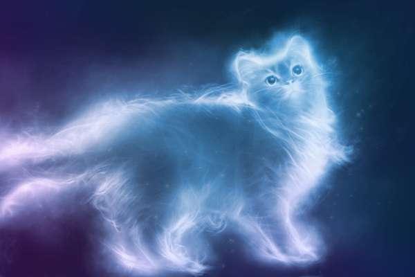 душа кота