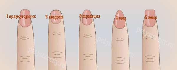 виды ногтевых пластин
