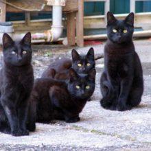 27 примет про котов в доме