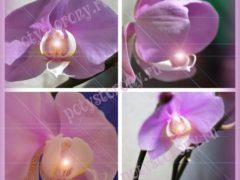 Орхидея в доме: приметы, суеверия, влияние на женщин и мужчин