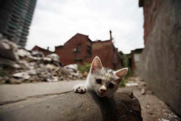 встреча с бездомным котенком